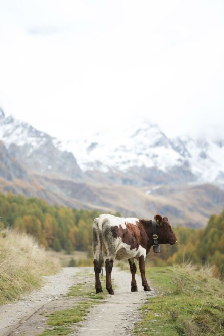 Wandern-in-Südtirol09